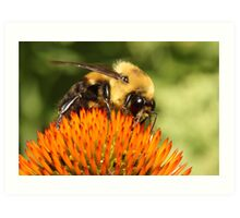 Big Bumble Bee Art Print