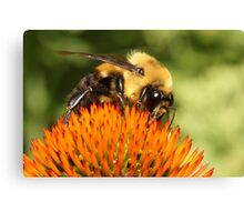 Big Bumble Bee Canvas Print