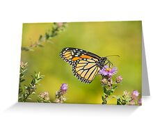 Monarch Of Raymore Park Greeting Card