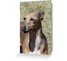 Italian Greyhound - Cosette Greeting Card