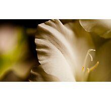 Gladiola 2 Photographic Print