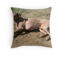 Italian Greyhound - Mr EJ Throw Pillow