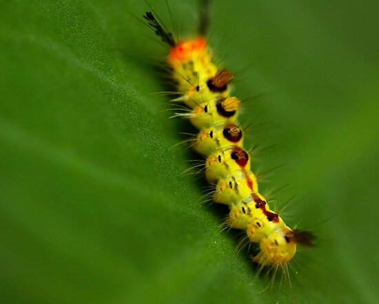 itchy bristley creepy crawly by lensbaby