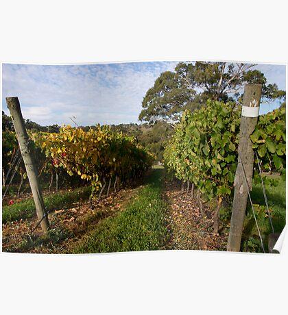 Longview Grape Vines Poster