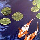 2 Koi Carp, dark water by Kardi Somerfield