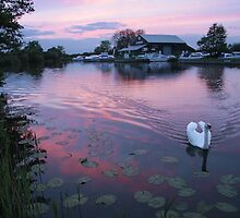Swan at sunset on the Broads by Jane Corey