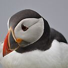 Puffin by ApeArt