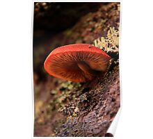 red gills Poster