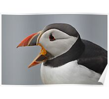 Laughing Puffin Poster