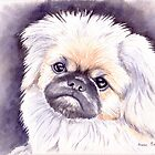 Pekingese by Anne Sainz