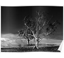 Two Trees, Ross, Tasmania Poster