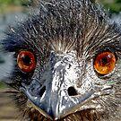 Evil Eyed Emu by waxyfrog
