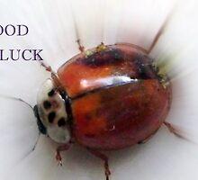 GOOD LUCK by Heidi Mooney-Hill