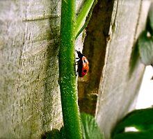 A Ladybug scaling a stem of a blackberry bush by MichealDavid