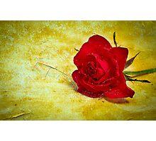 Distressed Rose Bloom Photographic Print