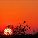 AT SUNSET IN KRUGER - SONSONDERGANG IN KRUGER PARK by Magriet Meintjes