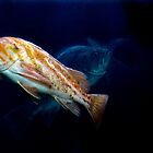 Rockfish #2 by mogue