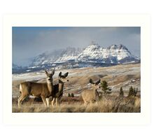 Ramshorn - What A Setting for These Blacktail Deer Art Print