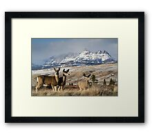 Ramshorn - What A Setting for These Blacktail Deer Framed Print