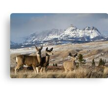 Ramshorn - What A Setting for These Blacktail Deer Canvas Print