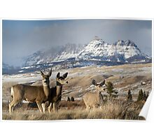 Ramshorn - What A Setting for These Blacktail Deer Poster
