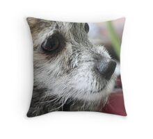 Dog's Look Throw Pillow