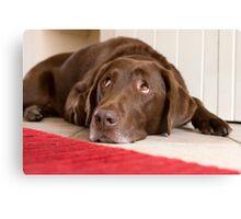 Chocolate Labrador Canvas Print