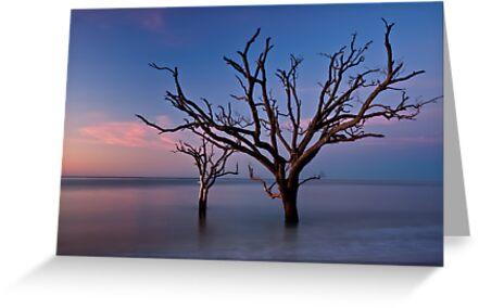 Stranded Trees by JHRphotoART