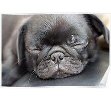 Sleeping Pug Poster