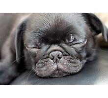 Sleeping Pug Photographic Print