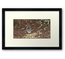 Squirrel Eating vegetables Framed Print