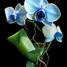 Blue Mystique Orchid by Stephen D. Miller