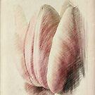 Pastel Tulip © by Dawn M. Becker