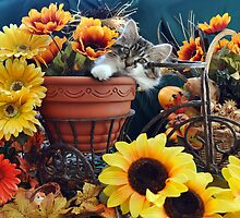Venus ~ Cute Kitty Cat Kitten in Fall Colors by Chantal PhotoPix