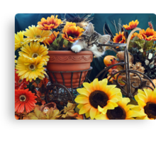 Venus ~ Cute Kitty Cat Kitten in Fall Colors Canvas Print