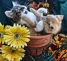Venus & Di Milo ~ Cute Kitty Cat Kittens in a Flower Pot Playing in Fall Colors by Chantal PhotoPix