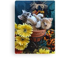 Venus & Di Milo ~ Cute Kitty Cat Kittens in a Flower Pot Playing in Fall Colors Canvas Print