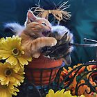 Di Milo ~ Psychocat ~ Angry Kitten Biting Kitty Cat by Chantal PhotoPix