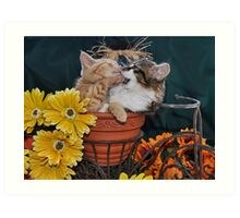 Venus & Di Milo ~ Foot in Mouth ~ Kitty Cat Kitten in Fall Colours Art Print