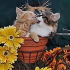 Venus & Di Milo ~ Foot in Mouth ~ Kitty Cat Kitten in Fall Colours by Chantal PhotoPix