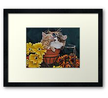 Venus & Di Milo ~ Foot in Mouth ~ Kitty Cat Kitten in Fall Colours Framed Print