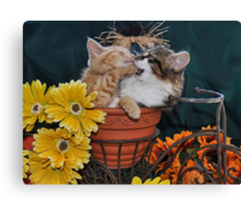 Venus & Di Milo ~ Foot in Mouth ~ Kitty Cat Kitten in Fall Colours Canvas Print