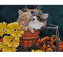 Venus & Di Milo ~ Foot in Mouth ~ Kitty Cat Kitten in Fall Colours Photographic Print