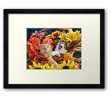Venus & Di Milo ~ Cute Kitty Cat Kittens in Fall Colors Framed Print