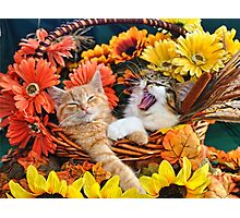 Venus & Di Milo ~ Cute Kitty Cat Kittens in Fall Colors Photographic Print