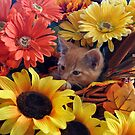 Di Milo ~ Cute Kitty Cat Kitten in Fall Colors by Chantal PhotoPix