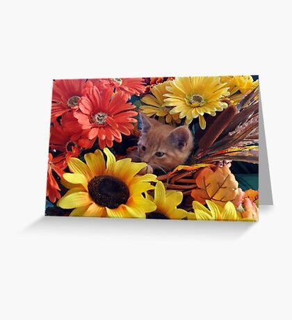 Di Milo ~ Cute Kitty Cat Kitten in Fall Colors Greeting Card