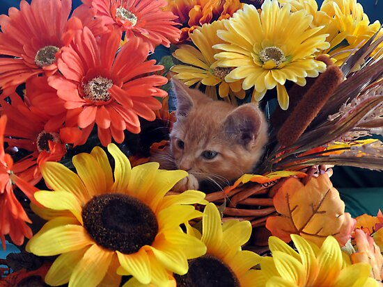 Di Milo ~ Cute Kitty Cat Kitten in Fall Colors by Chantal PhotoPix