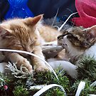 Venus & Di Milo ~ Contemplation ~ Cute Winter Kitty Cat Kittens by Chantal PhotoPix