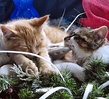 Venus & Di Milo ~ Contemplation ~ Cute Winter Kitty Cat Kittens by Chantal PhotoPix